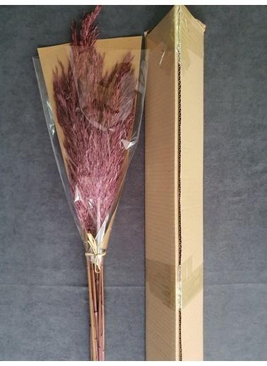 Kuru Çiçek Deposu Kuru Çiçek Şoklanmış 10'Lu Pampas Otu Karışık 100 Cm Pembe